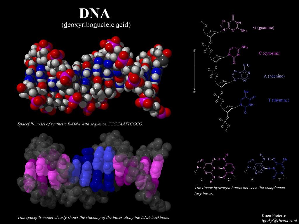 dnk-spermatozoida-izluchaet-spektr-volnovoy-informatsii