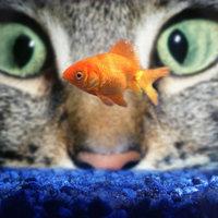 alex_likemoon