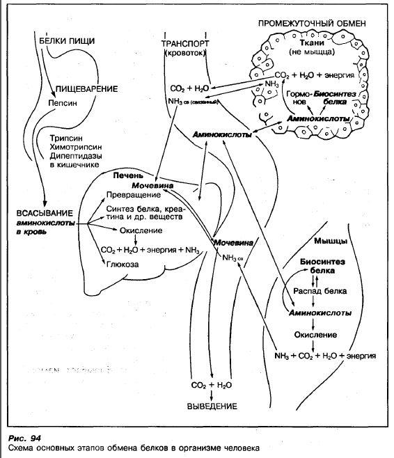 Тело Ацетоновое фото
