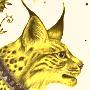 Goldlynx
